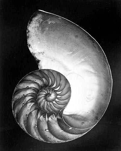Edward Weston - Shell - 1927